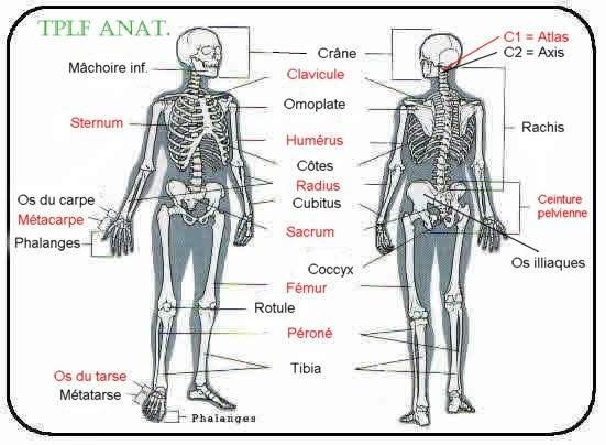 principaux os de notre corps></center></div> <br />     <b>Article Tags:</b>  #<a href=